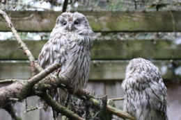 eksgraphy - Birds - IMG_8276