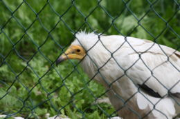 eksgraphy - Birds - IMG_8328