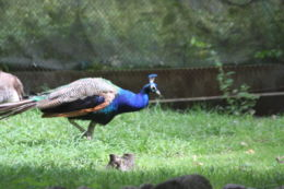 eksgraphy - Birds - IMG_8364