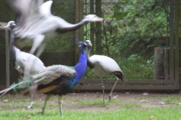 eksgraphy - Birds - IMG_8368