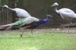 eksgraphy - Birds - IMG_8369