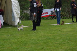 valeria33 - ESTONIAN CHIHUAHUA CLUB WINNER 2014 - IMGP6401